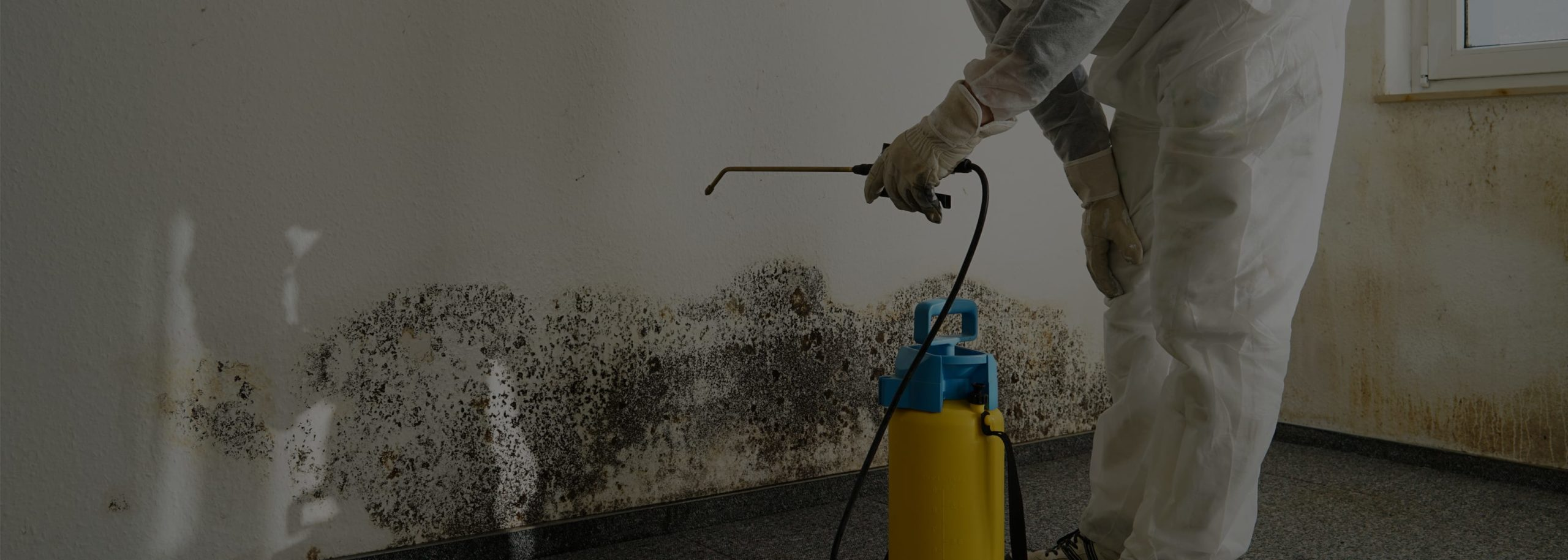 Mold Removal Leads header image