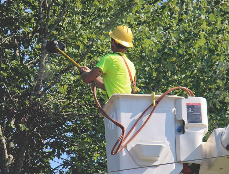 Tree Service Leads header image